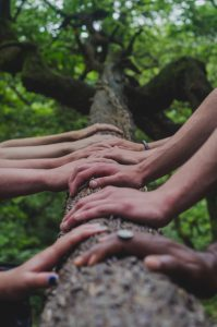 Many hands resting on a tree trunk